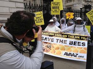 Udało nam się – Europa zakazała właśnie zabójczych dla pszczół pestycydów!!