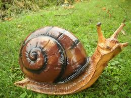 Według Unii Europejskiej ślimak to ryba lądowa