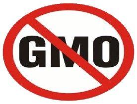 Francja przyjęła ostateczny zakaz upraw zmodyfikowanej genetycznie kukurydzy