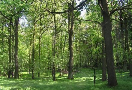 Lasom Państwowym grozi upadłość.Tusk oszukał leśników?