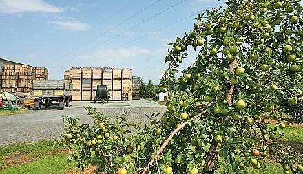Moskwa wprowadza embargo na owoce i warzywa