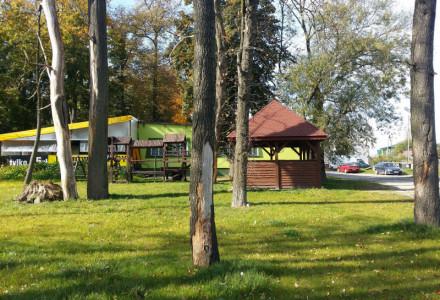 Jaka choroba zżera drzewa w okolicach garbowskiego kompleksu parkowego?