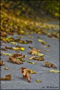 jesien 3