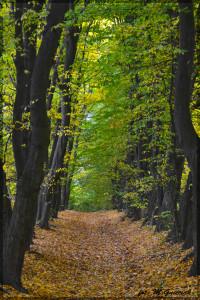 jesien 6