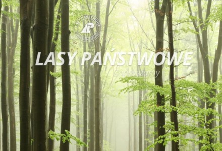 Czy wiecie, że zabrakło im tylko 5 głosów, aby zmienić Konstytucję i móc wyprzedawać polskie lasy?