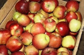Polskie sady zmrożone na wiosnę. Zbiorą będą mniejsze, a ceny wyższe