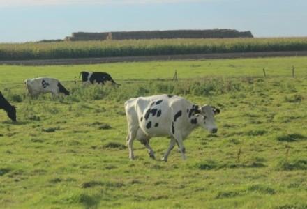 UE nałożyła na Polskę gigantyczną karę. Za nadprodukcję mleka rolnicy zapłacą aż 660 mln zł