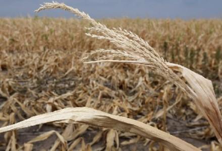 Nie będzie odszkodowań dla rolników