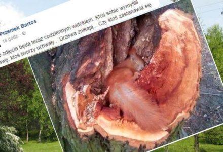 """Wiewiórka symbolem histerycznej manipulacji totalnej opozycji. """"GW i lewactwo grzeje się fotką, a drzewa wycięła Gronkiewicz-Waltz w 2016″"""